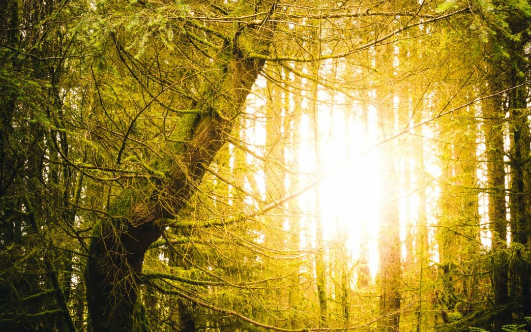 How Contact with Nature Can Improve Your Mental Health