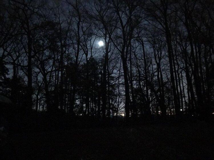 Full Moon Forest Bathing Walk - NARA Park - Acton, MA