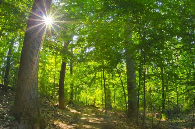 Rock Creek Park - Spring Walk - Politics & Prose