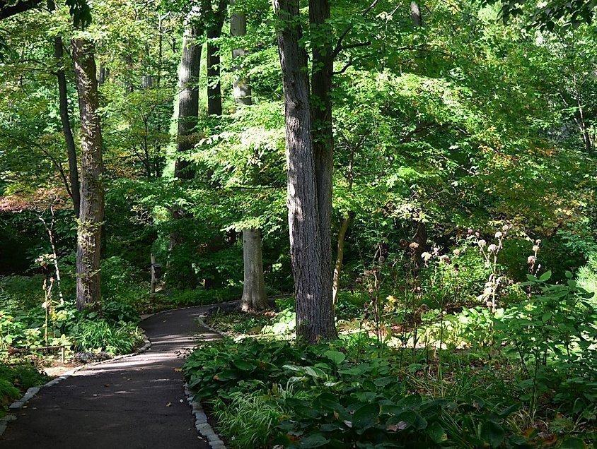 Forest Bathing Walk - Bucks County Audubon - New Hope, PA