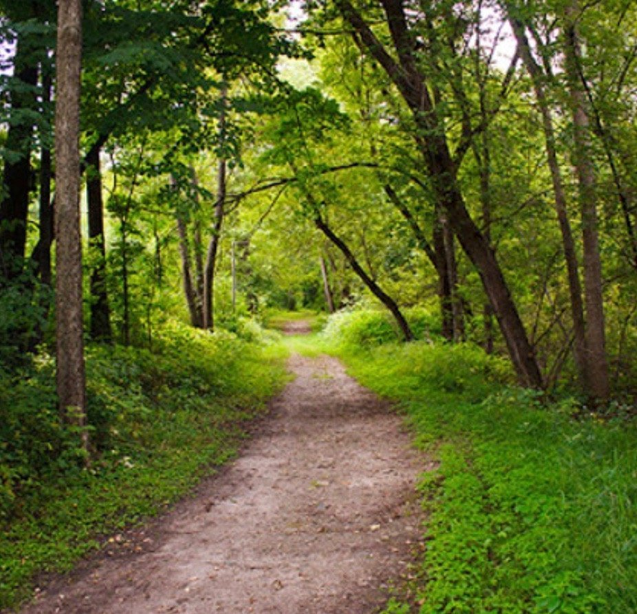 Three Rivers Park District: GreenFit Club Forest Bathing Series - French Regional Park