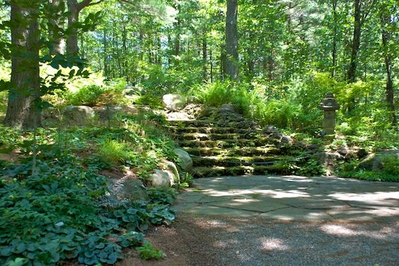 Healing with Nature: Forest Bathing - Tower Hill Botanic Garden