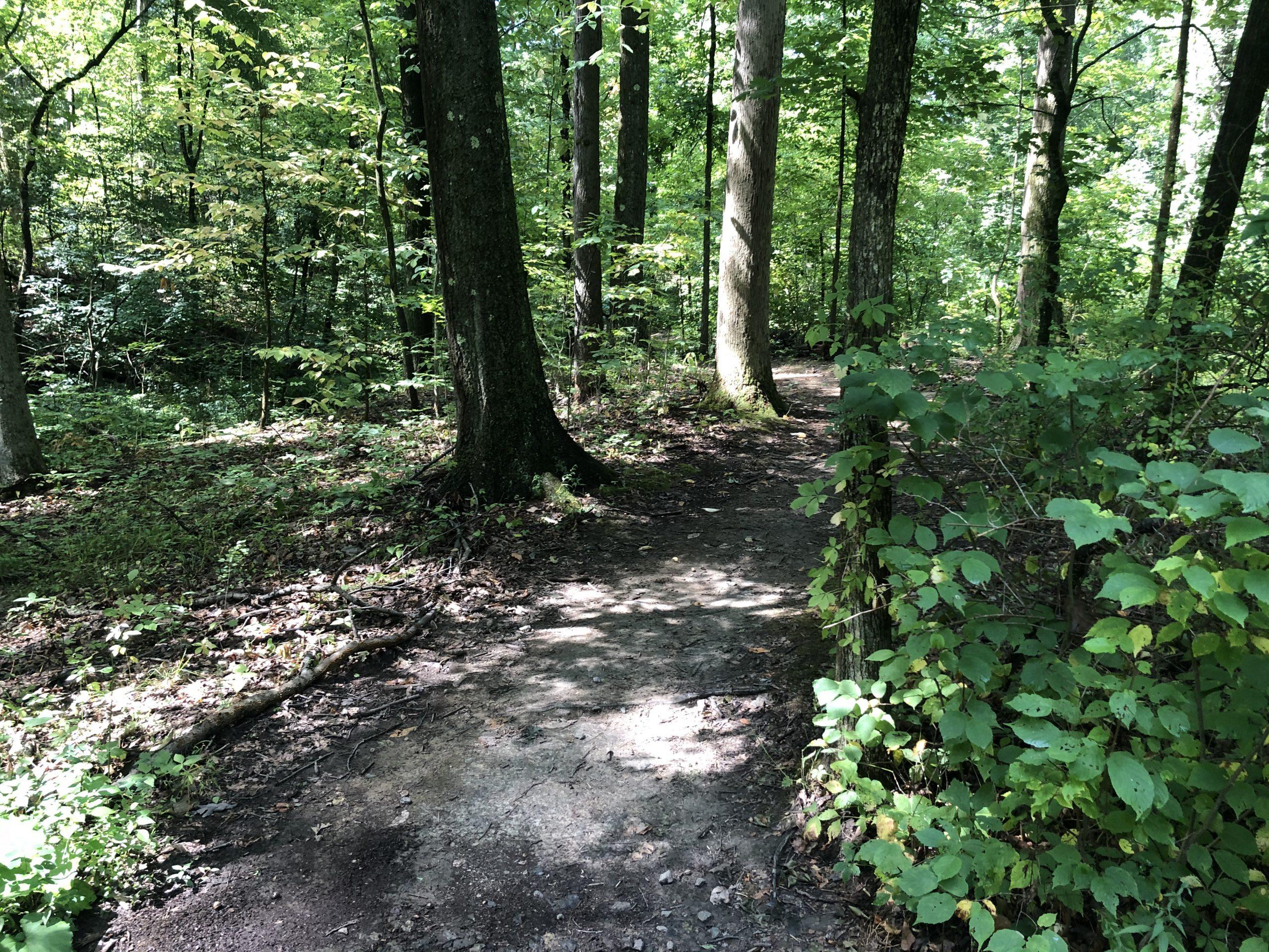 Rachel Carson Trail